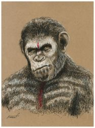 Caesar - Planet of the Apes by fizz1173