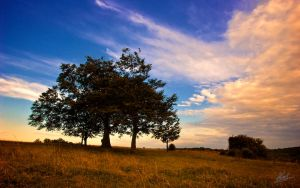 Farthing Downs Wallpaper by andy1349