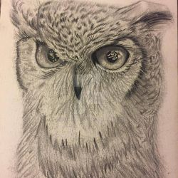 Owl Drawing by BethanyDil