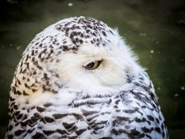 white owl by 01-11-89