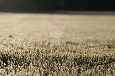 Frosted Grass 3 by lighthousesociety