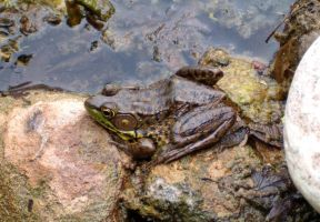 Flingy, the Flying Frog by Ripplin