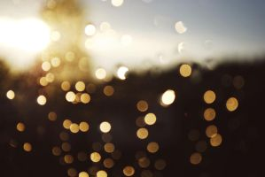 bokeh by look-and-see