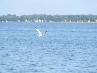 Seagull In Flight and Shoreline [STOCK] by AzrielMordecai