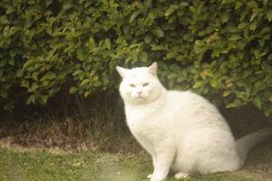 White Cat by Smyf