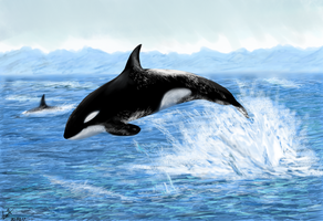 Killer whale by TanyaLis