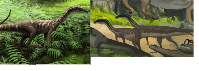 Comparison by Lucas-Attwell