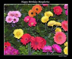 Happy Birthday Margherita by David-A-Wagner