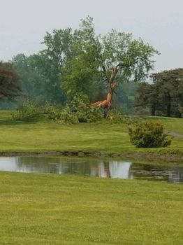 No More Tree on the Golf Course by WDWParksGal