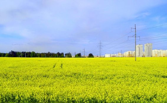 Yellow-and-Blue on Belarussian by Alenkamouse