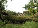 Fallen tree stock 1 by HumbleBeez
