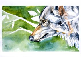 Aquarelle wolf by Zel204