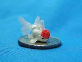 11mm Red Cap Oranda Goldfish by Ethereal-Beings