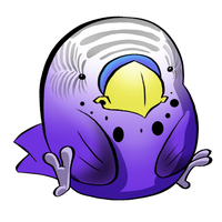 Budgie by HueTwo