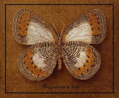 Butterfly 2 by INDRIKoff