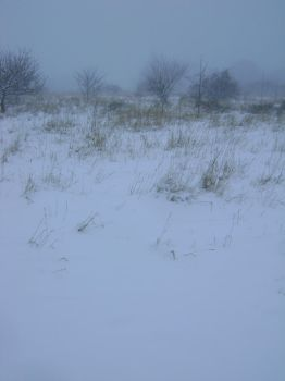 snowy fields -fog- 75 by dark-dragon-stock