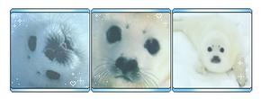 F2U Harp Seal Pup Divider by star-pawed