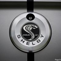 Shelby logo by flepi