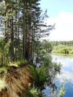 pines over water by angva