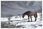 HORSE NEAR CREEK IN WINTER by 12CArt