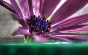 Flower - HDR by yoctox