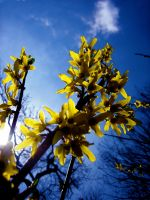 Yellow on blue by stephie00180