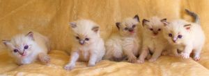Rare group kitten shot!!! by Carameldreamsx