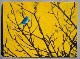 Blue Bird by pageboy