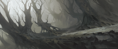 Petrified Forest by ShahabAlizadeh