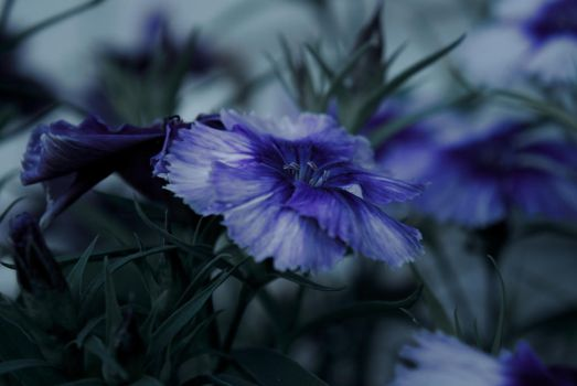 Blue by Sonnich
