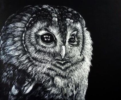 Scratch board Owl by maddileighxo