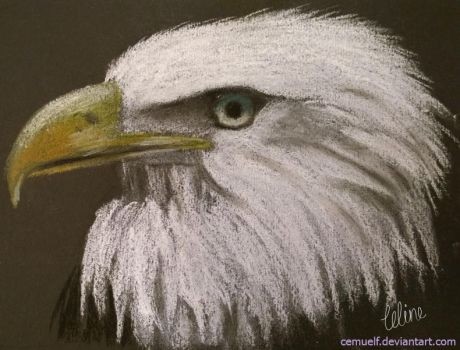 Eagle by cemuelf