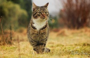 Theodor my cat by Cathrinejossang