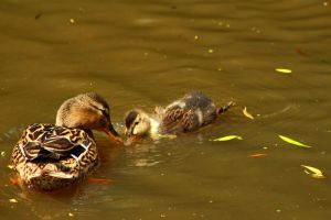 Taking care by harlia