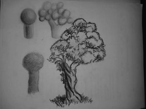 Tree study by SilverFoxDesigns