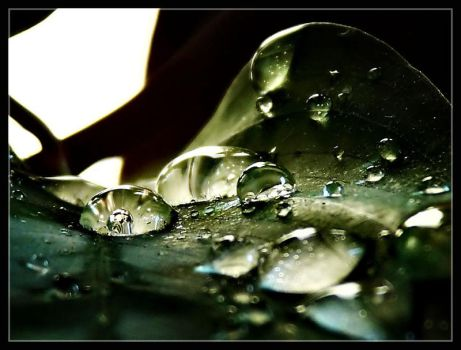 Water on the leaf by Catrian