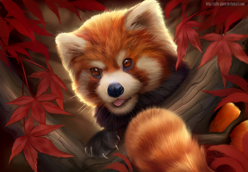 Red panda by Static-ghost
