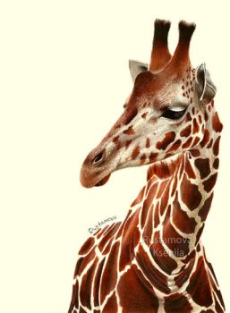 Pencil drawing. Giraffe by Rustamova