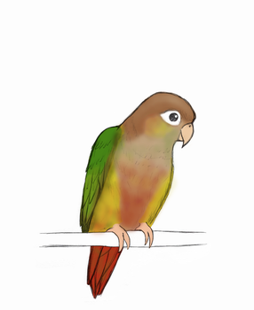 Green Cheeked Conure by palewildflower