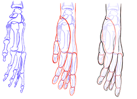 Hand Study Pinky Side by Seraphinae