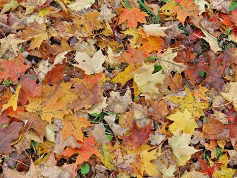 Blanket of Leaves by Michies-Photographyy