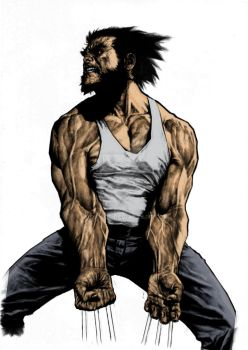 WOLVERINE - COLOR BASE by josiass