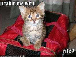 lolcats - take me wit u by machine-guts