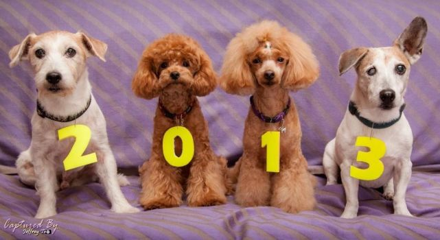 It's A New Year by PoodleSchmoodle