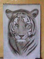 2013 drawing - Tiger by nielopena