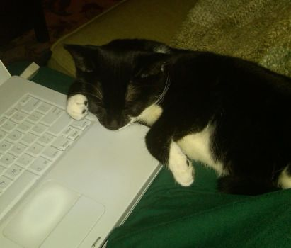 Laptop Kitty3 by ladym317