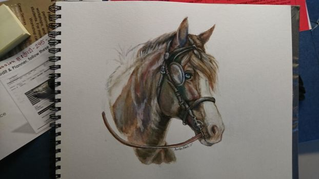 Gypsy vanner in tack watercolor by QueenAnneka