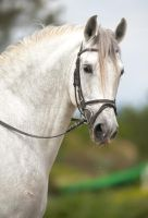 Stock Horse 7 by stock-provider