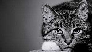 This is my Cat by Lasiu7