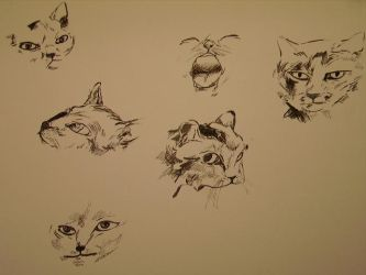 Catachters by FakeFrenchman
